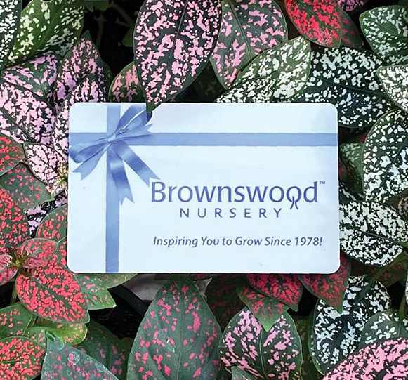 Brownswood Nursery Gift Cards